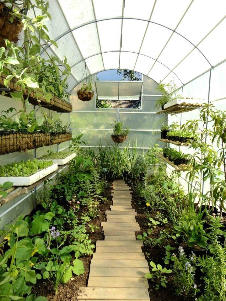 Urban Freedom greenhouse at Oranjezicht City Farm, Cape Town