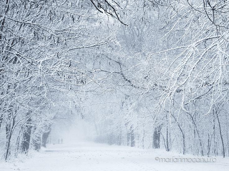 """Iarna in Parcul Monument din Braila! A mai trecut un an, cu bune, cu rele, cu satisfactii si insatisfactii. Am mai adaugat un an… Parcul asta il revad de fiecare data ca pe bradul meu de Craciun! Anul acesta a imbracat haina de omat. Fiind pe final de an, va urez un sincer """"La multi ani!"""" Ne revedem in 2015! Comments comments"""