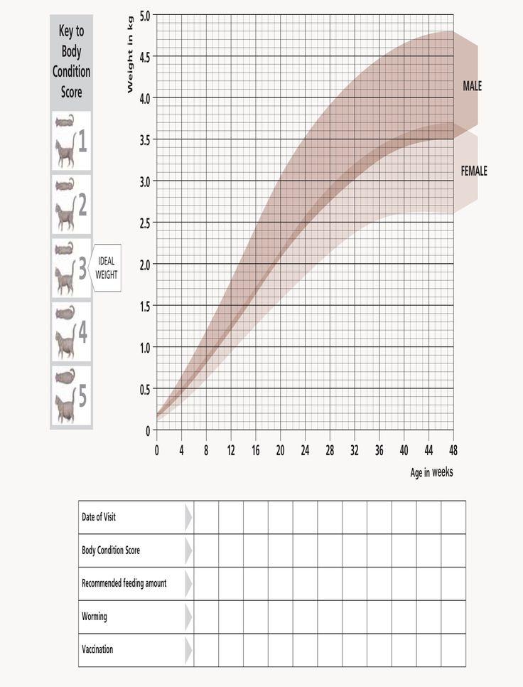 Kitten growth chart from Hill\u0027s Card prints Pinterest Growth