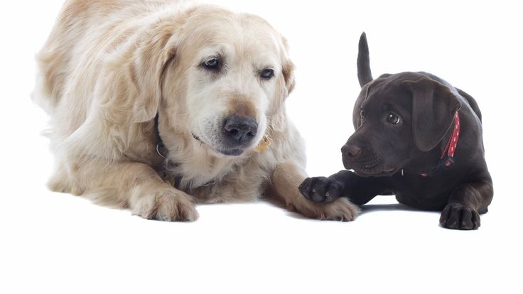Dog years calculator accounting for differences by breed -It's often said that every human year equates to seven dog years, but this calculator does a more accurate job.