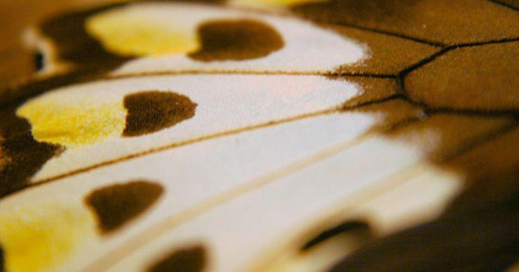 Como fazer asas para cosplay. Muitos cosplays de personagens exigem asas para uma incorporação precisa. Fazer as suas próprias asas com materiais baratos é uma alternativa amigável ao seu orçamento em relação às asas comercializadas. Esse método é customizável, e é possível fazer asas de vários tamanhos, formas e cores para combinar com qualquer personagem.