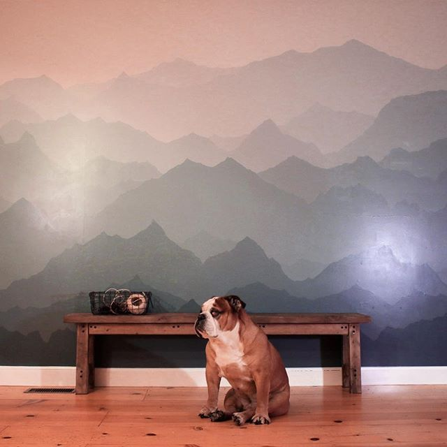 And on to the next project! I thought the living room needed some fresh mountain air, Walker agreed. Did this with just two colors, blending them to get 12 shades. #mountains #diy #homeimprovement @valsparpaint #theworldofbullies
