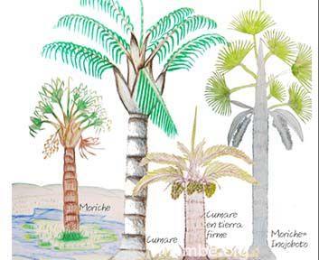 Dibujo de palmas para el trabajo artesanal.  (Vichada - Colombia) Conoce más de nuestro trabajo en Mambe.org!