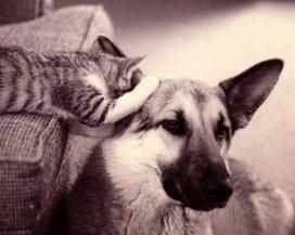Статья о психологии и домашних животных