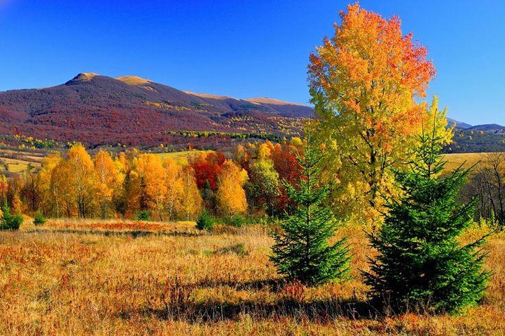 Połonina Wetlińska – pasmo górskie i połonina w Bieszczadach Zachodnich. Jest jednym z najczęściej odwiedzanych miejsc w Bieszczadach