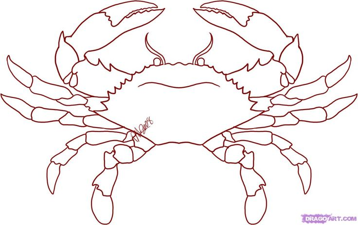 How to Draw a Crab, Step by Step, Sea animals, Animals, FREE Online Drawing Tutorial, Added by Dawn, December 16, 2008, 8:51:13 pm