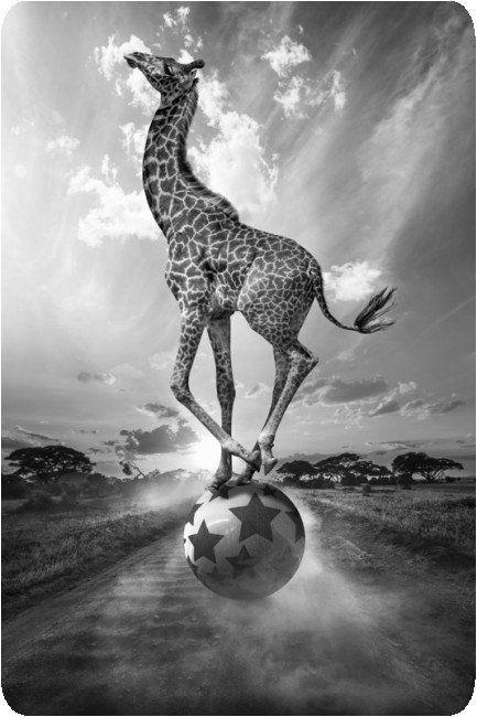 Thomas Subtil - Hakuna Matata - Safari Kenya 10