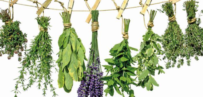O segredo da boa comida é o tempero! Que delícia! Aqui em casa eu tenho várias ervas aromáticas e uso sempre no dia a dia. Elas são fáceis de cultivar na horta e já mostrei no meu videotour AQUI. Outra…