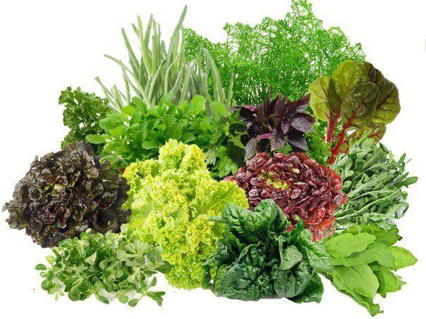 Важные советы! Как правильно сажать зелень? |