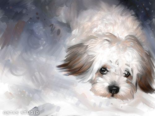 Maltese Dog Pet Portrait Original Art Painting Canvas Giclee Print Large | eBay