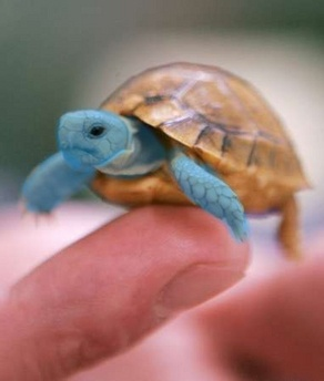 Squirtle - realistic Pokemon   Just Missing My Sweetie ...