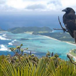 Atop Mt Gower - Lord Howe Island Group