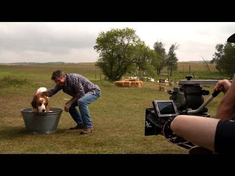 A Dog's Purpose - YouTube