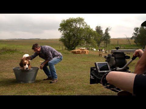 A Dog's Purpose - YouTube