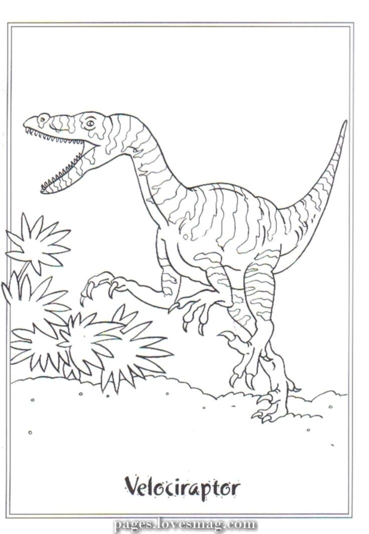 Creative And Great Coloring Drawings Velociraptor Picture Velociraptor Dinosaur Coloring Pages Dinosaur Coloring Cool Coloring Pages