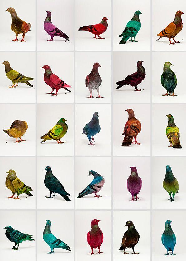 © Julian Charriere Colorful Pigeons In Venice « Ça donne des ailes une bonne petite névrose harmonieuse.» Fabrice Luchini