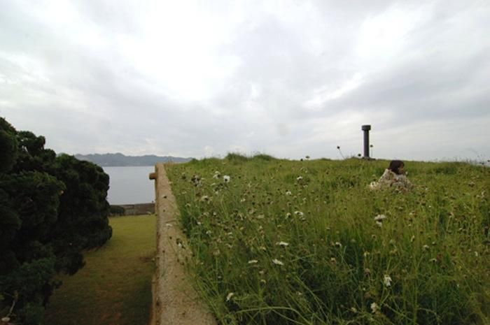 Architect's Visit: A Green Roof, With Wildflowers