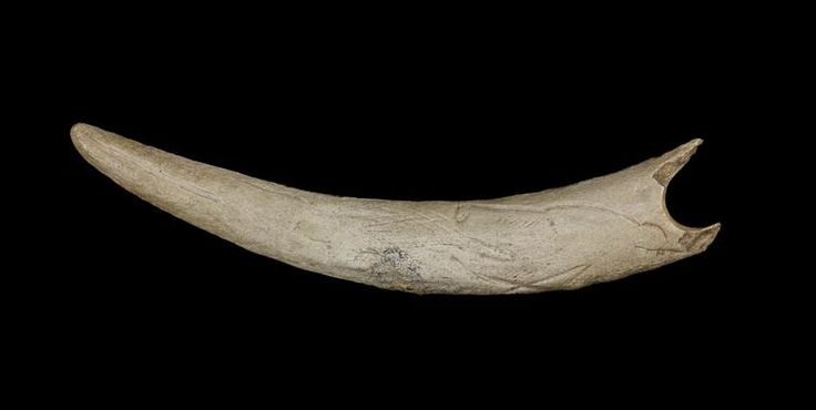 Bâton percé gravé figurant un oiseau et une tête d'ours crachant en bois de renne, Grotte de Massat (Ariège), Magdalénien © RMN-GP (MAN) / F.Raux
