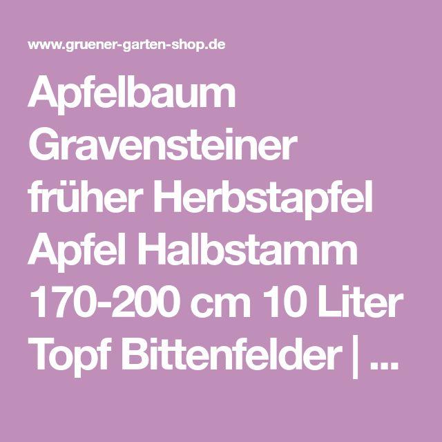 Apfelbaum Gravensteiner früher Herbstapfel Apfel Halbstamm 170-200 cm 10 Liter Topf Bittenfelder   Grüner Garten Shop