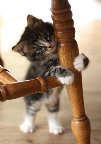 Playful baby...