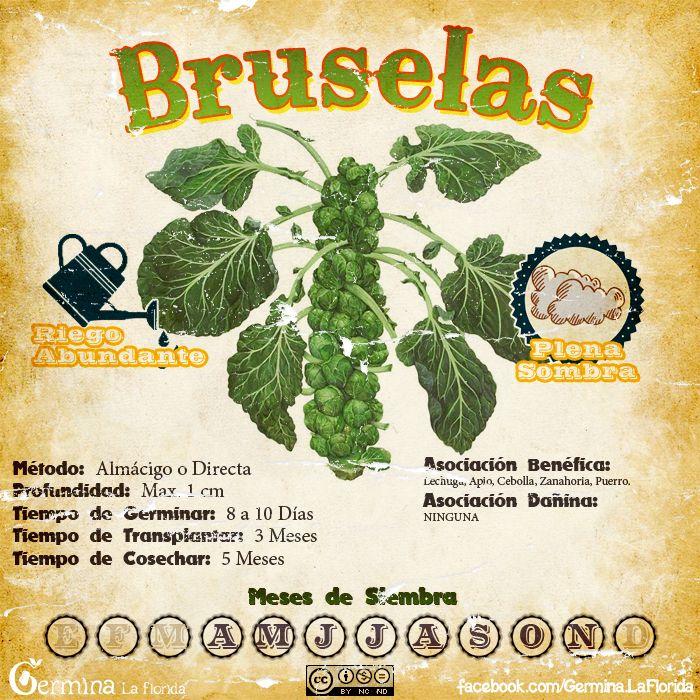 Bruselas.jpg (700×700)