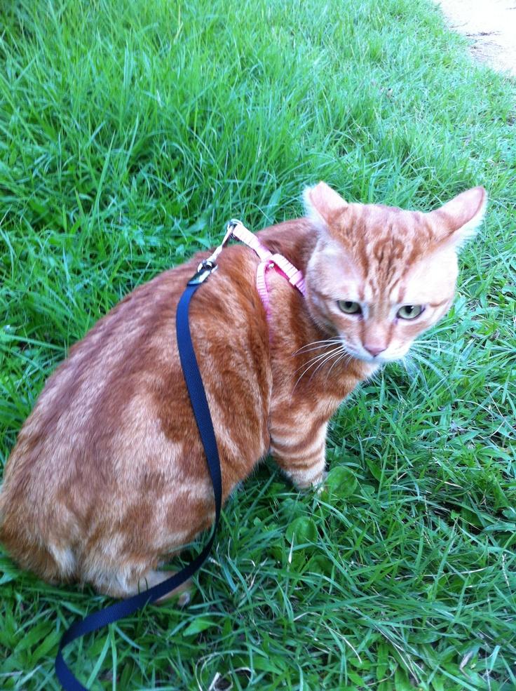 Cat walk with Jack Jack.