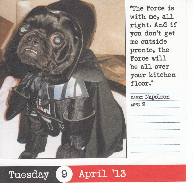 Darth Pug! - A Black Pug Dressed Up Like Darth Vader from Star Wars.