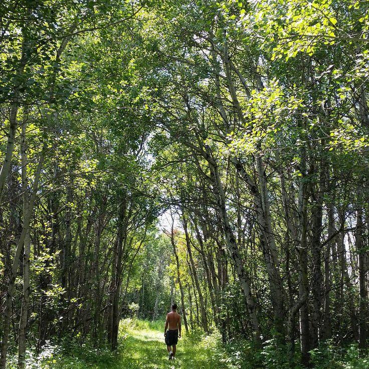 6 Beautiful Hiking Trails Near Regina To Explore This Summer  | Narcity Regina
