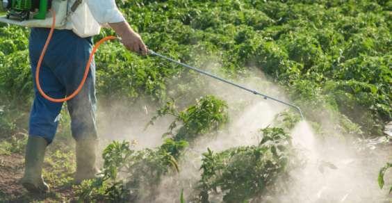 A Bayer comprou a Monsanto semana passada por 60 milhões de euros. A Europa e diversos outros países proibiram o uso do glifosato, componente ativo do Roundup.