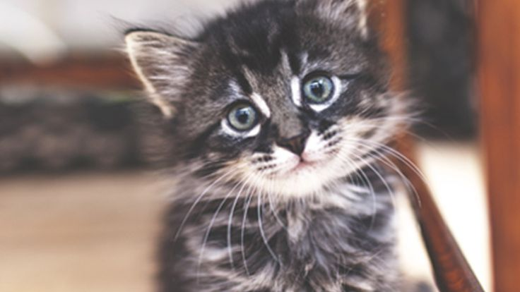 13 Adorable Kittens That Will Make Your Day: It's National Cat Day! Let's celebrate by looking at these adorable kittens that are sure to make your day.