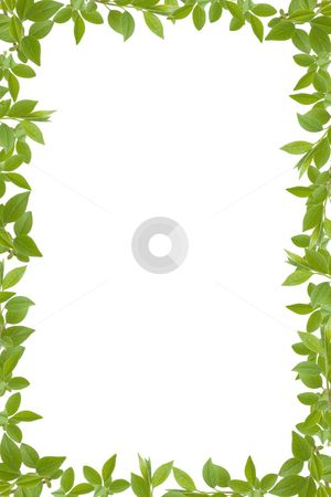 Leaf Border Images Google Search Corona Flowers