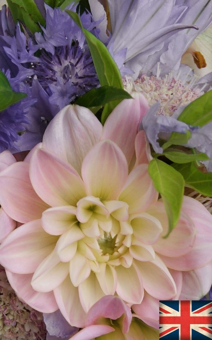 DAHLIA, SCABIOUS and CORNFLOWER | Florissimo, Shropshire - Flowers for weddings, events and businesses in Shropshire and beyond. British-grown dahlia generally avail Jul-Oct, scabious Jun-Oct, cornflower May-Aug