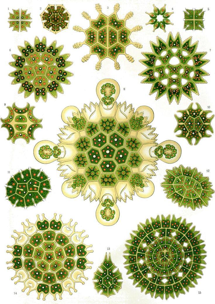 Ernst Haeckel – Obras de arte de la Naturaleza