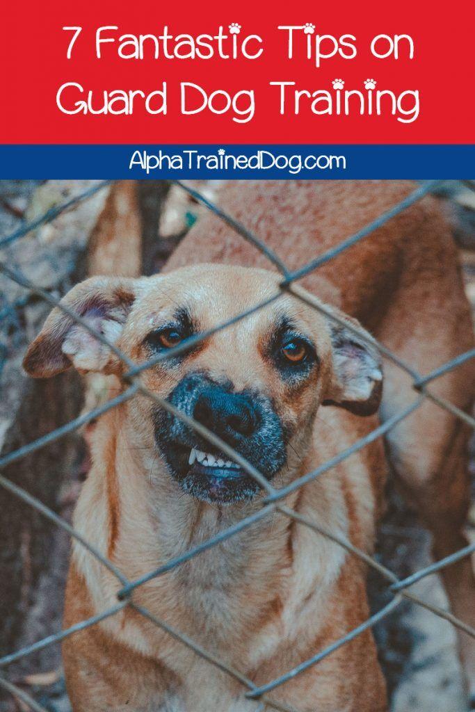 7 Fantastic Tips On Guard Dog Training In 2020 Guard Dog