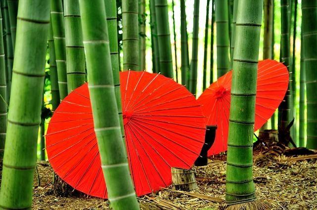 Bamboo The new Future