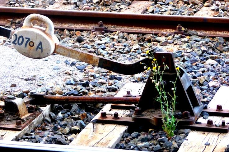 vedo fiori dappertutto, a passeggio, su Pinterest, nelle riviste, fra i binari della ferrovia ...