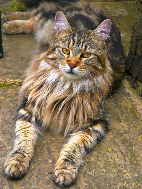 Best kitten images ideas on pinterest cute kittens images