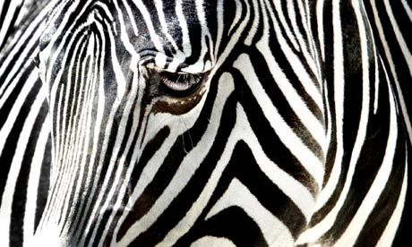 Striped - Photos to Use for Descriptive Concepts of Texture, Taste, Smell, Temperature, (Sensory Concepts) - Pinned by @PediaStaff – Please Visit ht.ly/63sNt for all our pediatric therapy pins