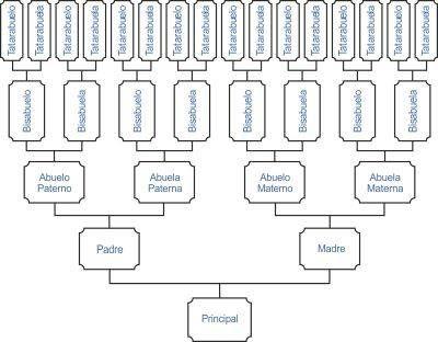 Resultado de imagen de arbol genealógico