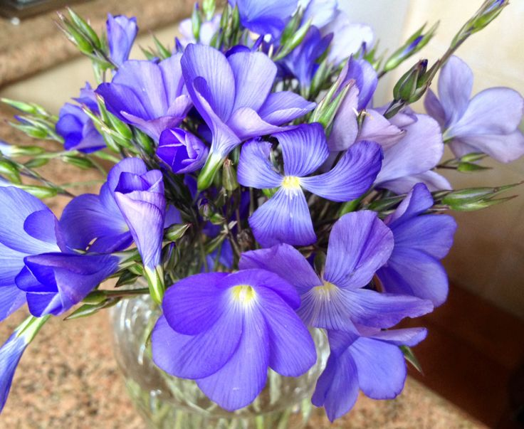 Flores silvetres