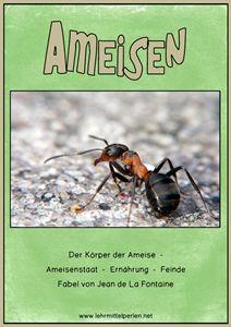 Ameisen Ampelheft Grün