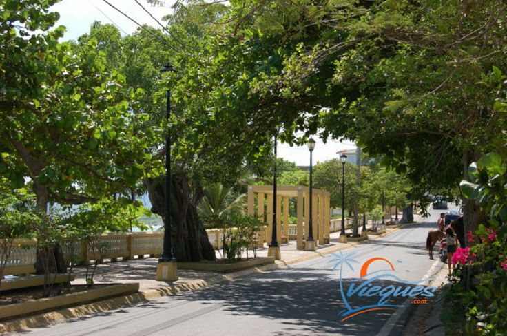 Pin De Cindy Ayala En Mis Muñequitos: Vieques Island, Puerto Rico