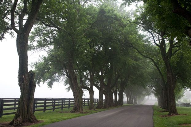 Conkwright - Surnames - Genealogy.com