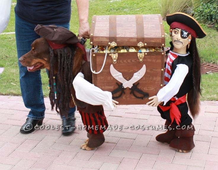 Best Homemade Dog Pirate Costume ...I really want to dress my dog up like this.