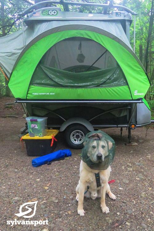 A Pup Scout Is Always Prepared Dogs That Camp Pinterest