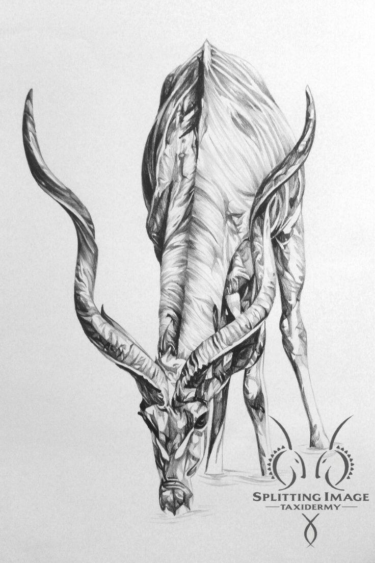 Art imitates life.  #SplittingImageTaxidermy #africa #southafrica #taxidermy #taxidermist #hunting #art #artist #drawing