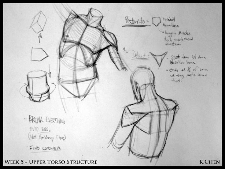 Analytical Figure Drawing SP08: Week 5 - Upper Torso Demo