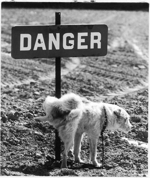 Pee on Danger! -repinned by San Francisco photography studio http://LinneaLenkus.com  #fineartphotography
