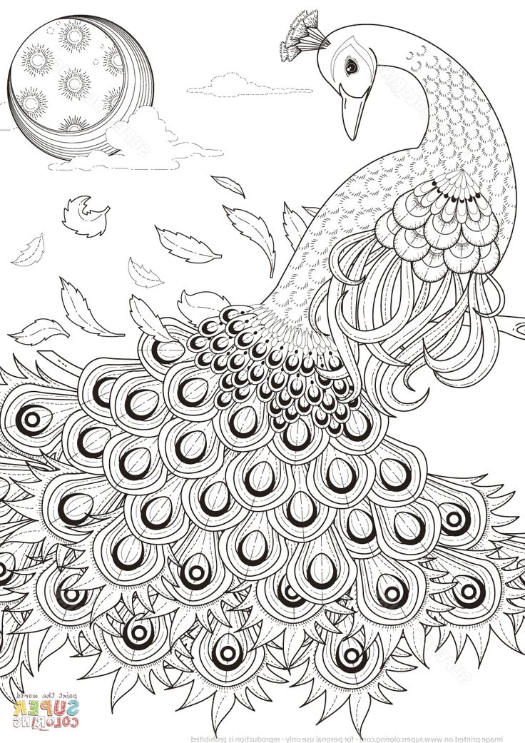 Peacock Coloring Pages Coloring