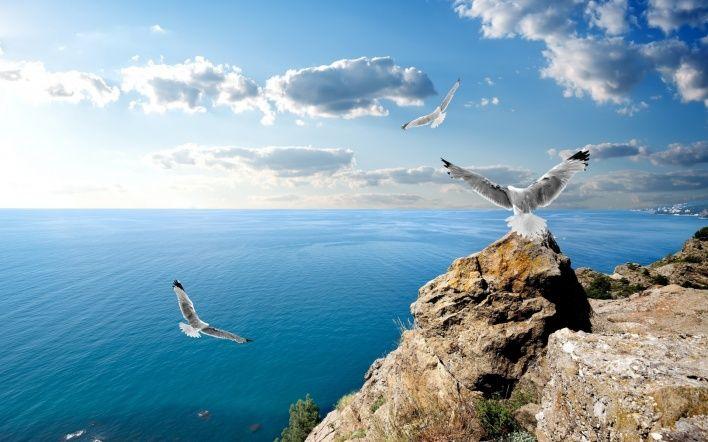 природа море горизонт чайки птицы животные